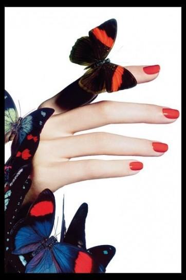 5, farfalle (1)