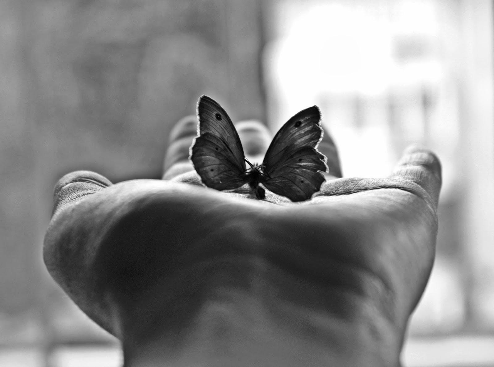 BuongiornoLink - Buongiorno Come un battito d'ali