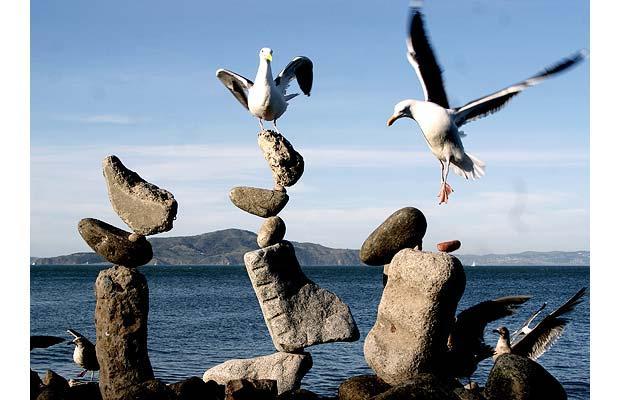 bird-balance-2_1465146i